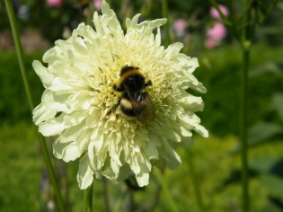 image of bee on flower