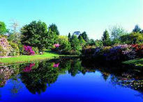 picture of rhododendron garden