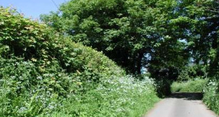 image of hedgerow