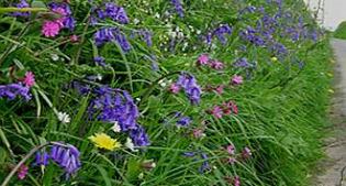 image of hedgerow plants