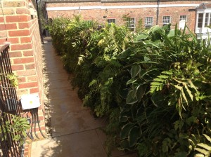 Upstairs, Downstairs - a-view-of-the-living-wall