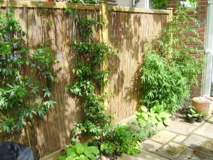 Long Thin Suburban - beckenham-fencing