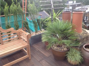 Rooftop Jungle - denmark-hill-planting