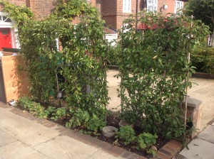 Muswell Hill Haven - front-planting-in-muswell