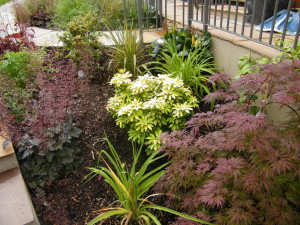 Modern & Traditional Meet - greenwich-plants