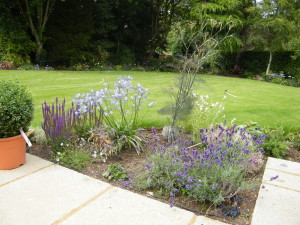 Country Garden with Natural Water Course - lavendar