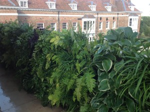 Upstairs, Downstairs - living-wall