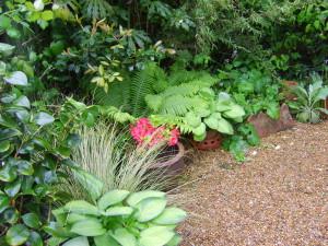 Lush Tropical - lush-planting