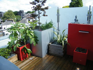 On Top of the World - new-camden-plants