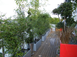 On Top of the World - new-decking-planters-and-feature