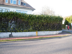 Double Dutch - old-fencing