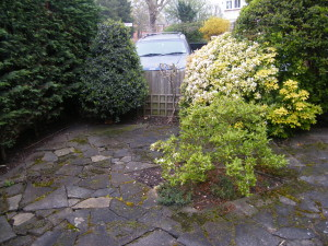 Dulwich Village Delight - old-front-garden
