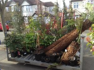 Artist's Garden - plants-arrive