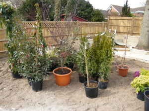Escape to the Country - plants-in-hailsham