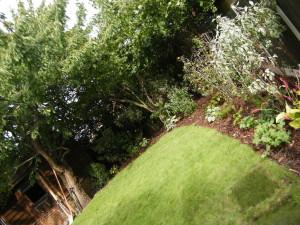 Generation Games - romford-lawn