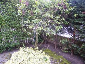 Hidden Trampoline - the-old-dulwich-garden