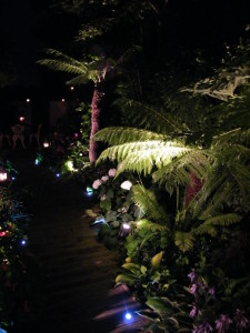Lush Tropical - tree-ferns-lit-up