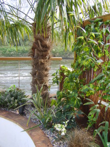 Contemporary Waterside - tropical-river-planting
