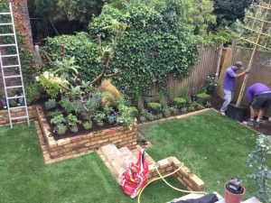Hampstead Garden Design - planting-4