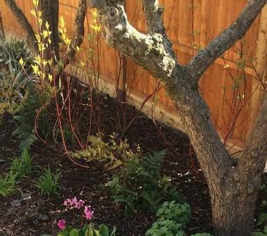 Boarder Planting