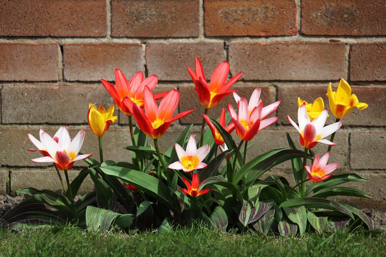 Luxury Garden Designers