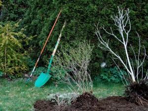 gardening-331668_960_720