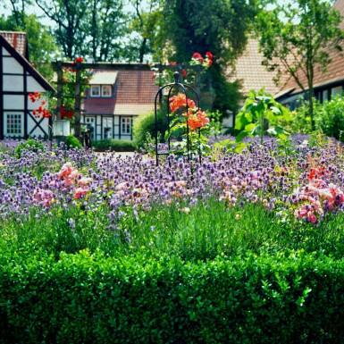 Fulham Garden Designer