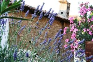 lavender-freepik