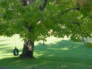 tire-swing-on-maple-tree-1173413-640x480